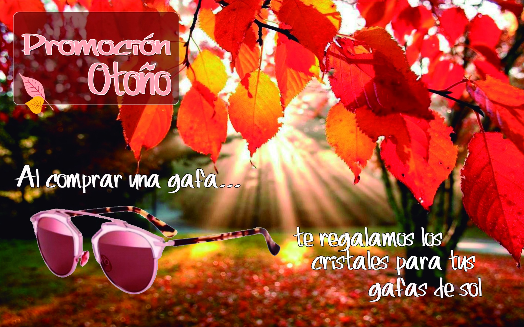 Nuestras promociones de otoño